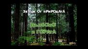 Звуци от природата - Дълбоко в гората
