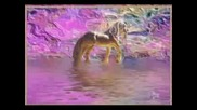 Michael Bolton - A Love So Beautiful (Unicorn)