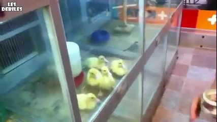 Патенца се кефят на йо-йо