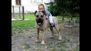 Dogo Canario - Puma Baby Bogi
