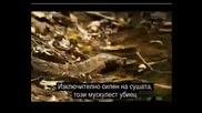 Най - Смъртоносните Животни:африкански Питон