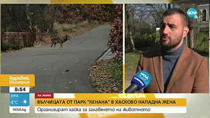 """Вълчицата от парк """"Кенана"""" в Хасково нападна жена"""