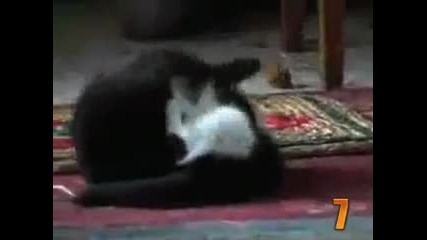 10-те най-сладки котешки моменти