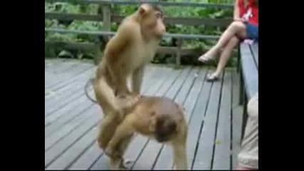 The Animal S.e.x Video.avi