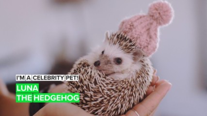 I'm a Celebrity Pet! Luna is a prickly up-and-comer