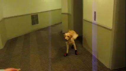 Куче бяга със маратонки