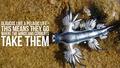 7 от най-странните животни, които не подозирахте, че съществуват