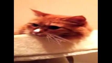 Котка се плези от звук от касетка!