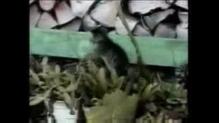 Котката и ..кактуса :) ) ) ) ) )