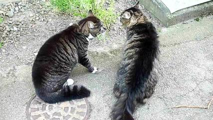 Луди котки се карат ! Смях!