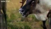 Забавни Говорящи Животни - 4