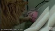 Cats Alarm Clocks