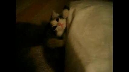 Как да сложим котката да спи