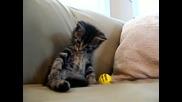 гневна и уплашена котка