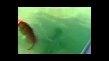 Куче напада акула