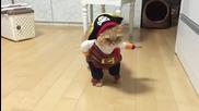 Котката пират, готова да завладява нови хоризонти ( Смях)