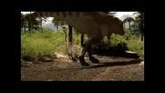 T - Rex Vs. Ankylosaurus