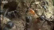Светът на термитите - Подземен живот