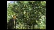 Реклама - Bud light Бирено Дърво