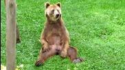 мечка се почесва където не трябва