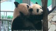 Непохватна панда