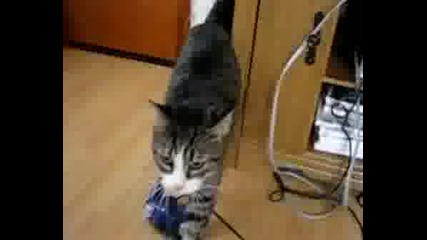 I Kissed A Cat - Parody
