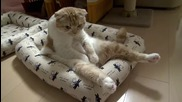 Котка Седи Като Човек