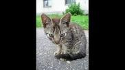 Чело Коте :)