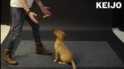 Как реагират кучетата на летящ кренвирш! .. Смях