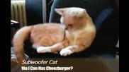 Котка Върхy Cубуфер