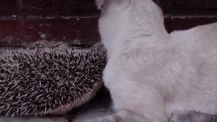 Котето и таралежът са много близки приятели