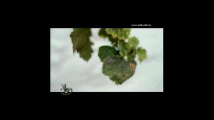 Despina Vandi - Erota thelei i zoi