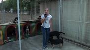 Супер забавно видео ! Докато се усети , тази репортерка беше маркирана три пъти от едно куче.