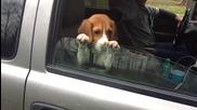 Малко куче се опитва да задържи прозореца на колата отворен!