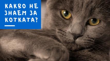 Какво не знаем за котката?