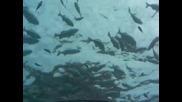 Първият подводен ресторант! (на Малдивите)