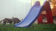 Две малки лисичета си играят на пързалката