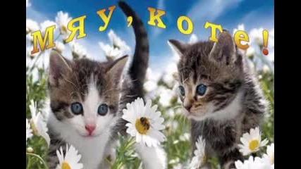 Двг Щастливци - Мяу, Коте!