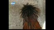 Кокошка - пънкар