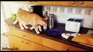 Любопитни котки стряскащи се от тостер