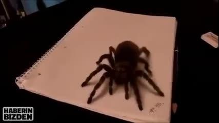 3d рисунка на тарантула,заслужава си да се види!
