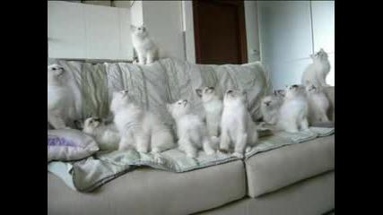 Откачени Котки