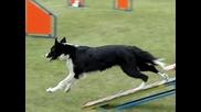 Супер Яко! - Международно първенство за кучета Коли 2012 Slow Motion Movie