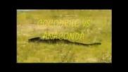 Животински битки - комплимация
