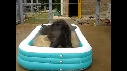 Слончета си играят в надуваем басейн