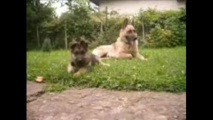 Снимки - Компилация с Кученца