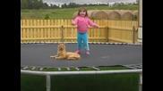 Котка и дете скачат на батут