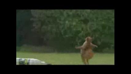 Уникално!катерица Играе Футбол