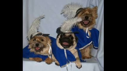 Как Се Обличат Кучетата По Празниците:))))