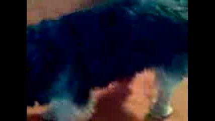 Кученцето Ми Джъмбо